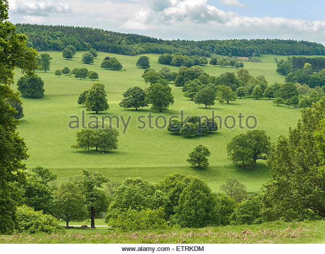 landscaped-trees-and-green-fields-of-cha
