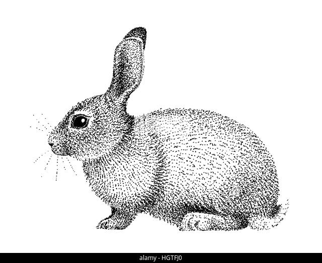 Rabbit drawing black and white