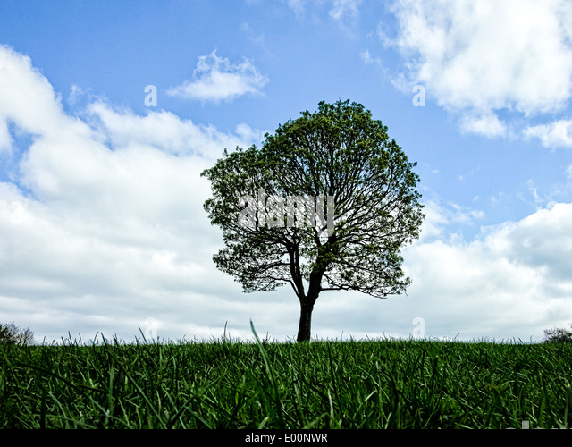 a-green-tree-against-a-blue-sky-with-whi
