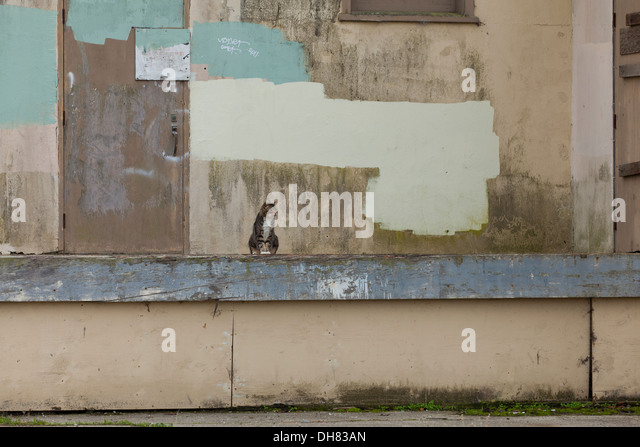 feral-cat-in-front-of-abandoned-building