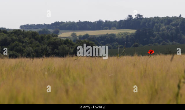 solitary-poppy-in-the-fields-of-france-f