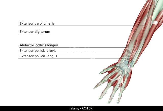 Ankle Anatomy Images Stock Photos amp Vectors  Shutterstock