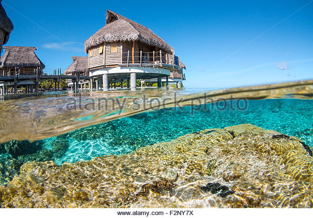 french-polynesia-corals-and-maxima-clams
