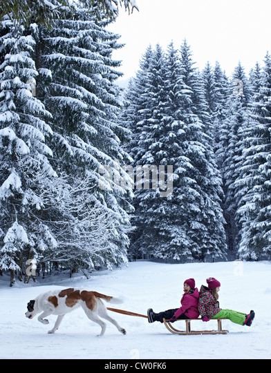 Dog pulling children on sled in snow - Stock Image