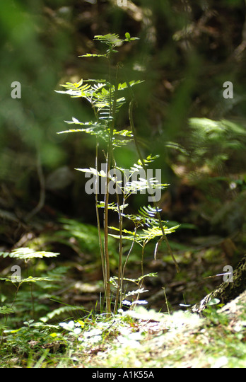 young-sapling-growing-in-thick-scandinav
