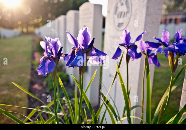 Close up of flowers growing on grave - Stock Image