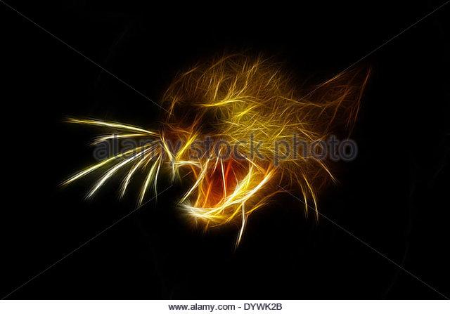 FEROCIOUS ATTITUDE OF AN PUMA JAGUARUNDI JAGUARUNDI HEAD CLOSE UP - Stock Image