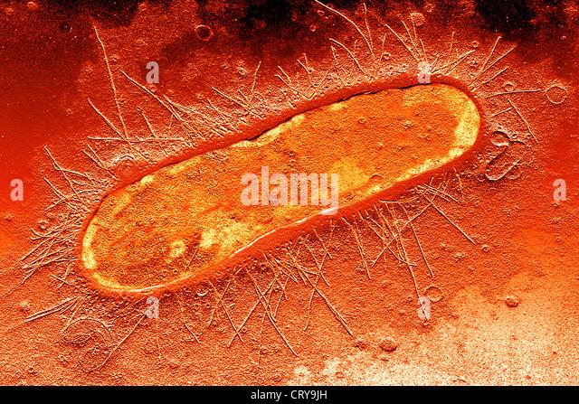 IB Biology Notes  22 Prokaryotic cells