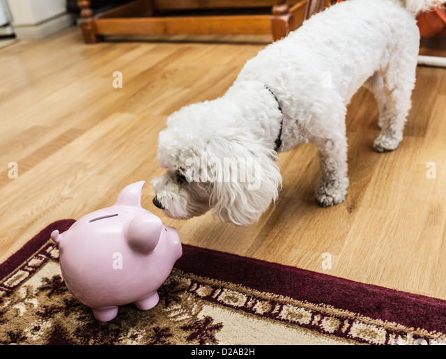 Dog examining piggy bank in living room - Stock Image