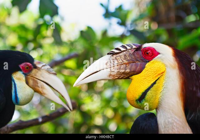 Asian rainforest birds