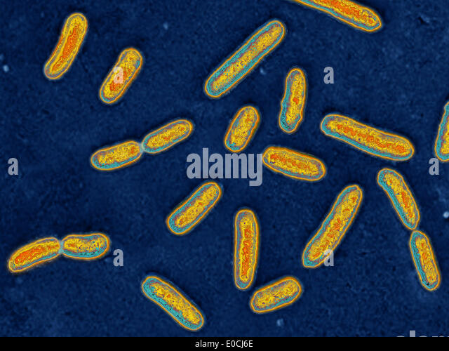 the impact of the bacteria pseudomonas aeruginosa on the peoples health and its treatment