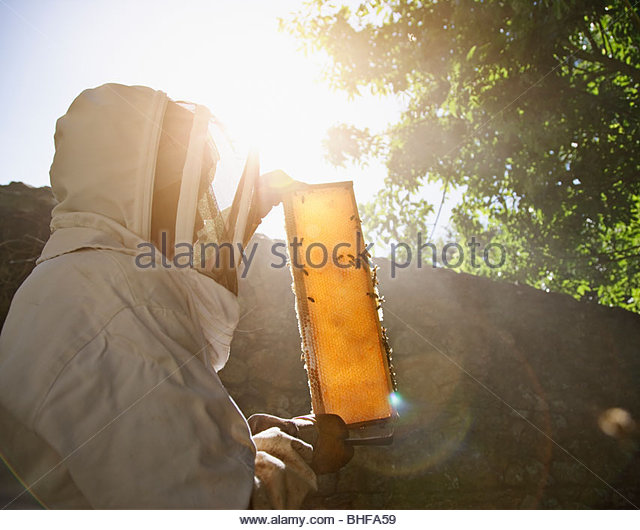 Beekeeper  holding bees and honeycomb - Stock Image