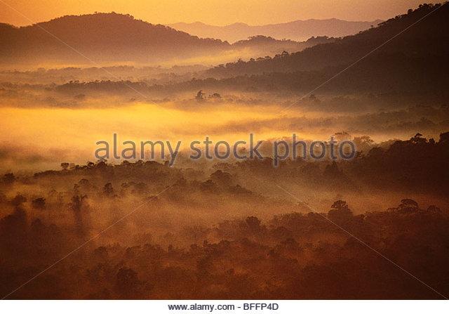 Rainforest at dawn (aerial), Cockscomb Basin, Belize - Stock Image
