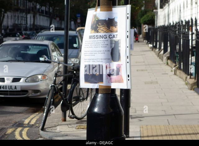 missing-cat-poster-in-london-street-deja