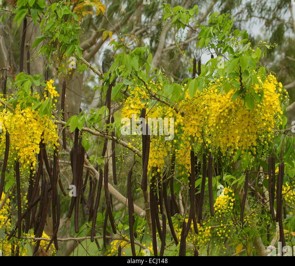 Medicinal plants used by traditional healers for the