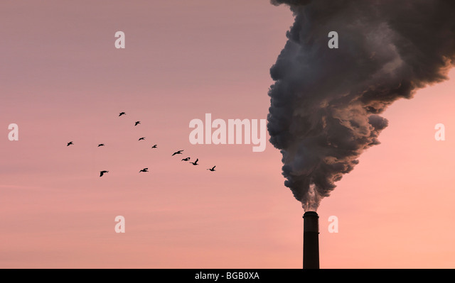 smokestack-chimney-pollution-with-birds-