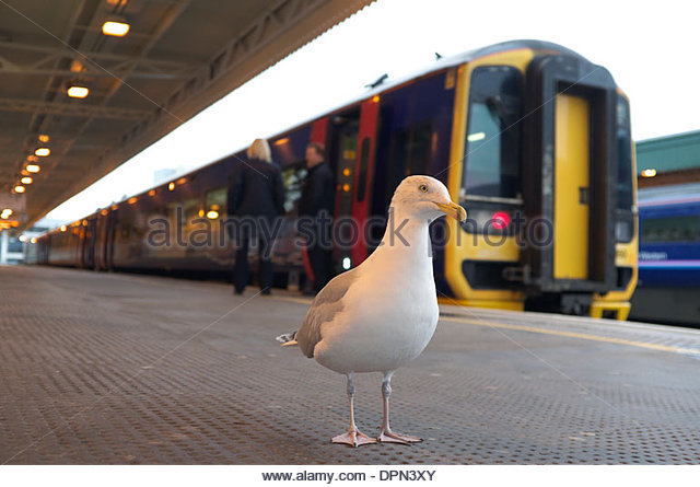 a-seagull-on-the-platform-at-cardiff-cen