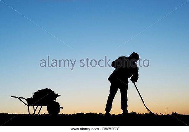 Gardener with wheelbarrow raking tree leaves. Silhouette - Stock Image