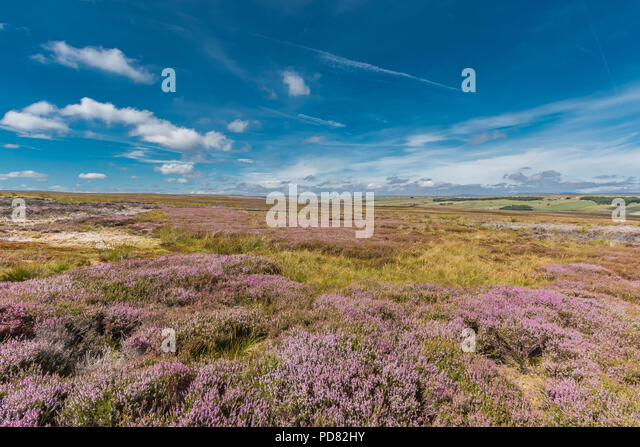 north-pennines-aonb-landscape-flowering-