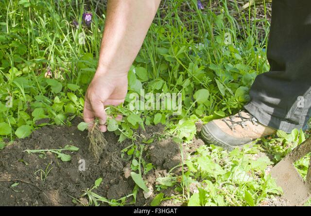 weeding-garden-f3hgat.jpg