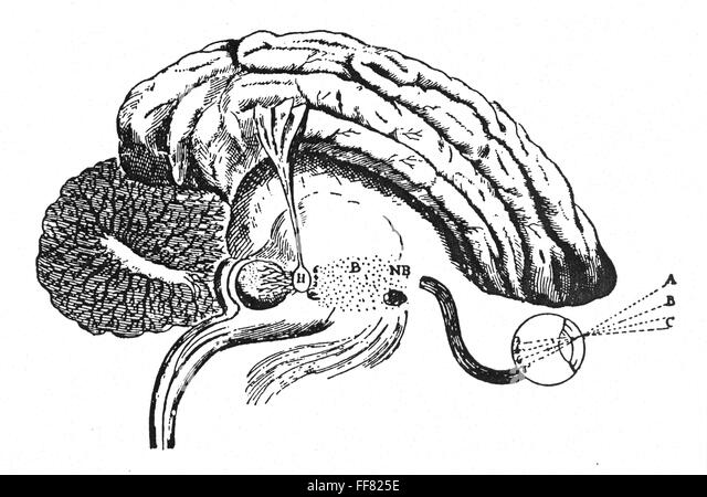 pineal gland research papers