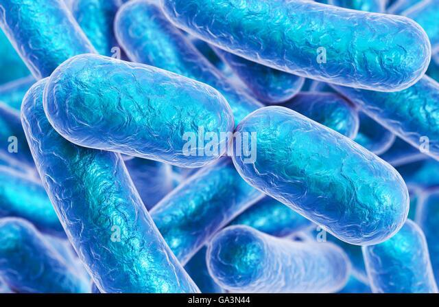 esherichia coli essay