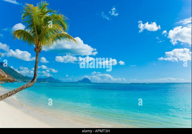 beach-of-mauritius-with-palm-strand-von-