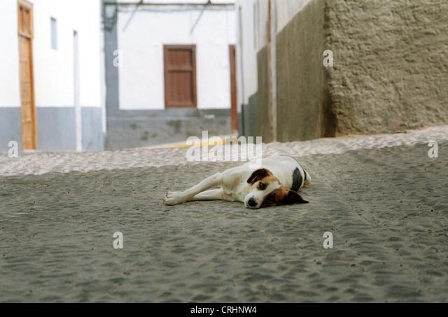 agaete-gran-canaria-spain-dog-holds-sies