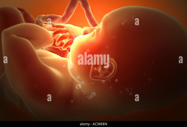 Развитие плода в утробе фото