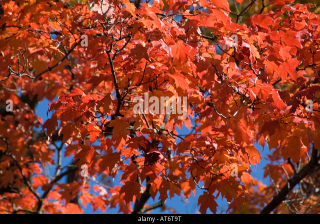 autumn-fall-autumnal-leaves-leaf-red-col