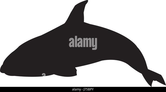 Killer whale silhouette