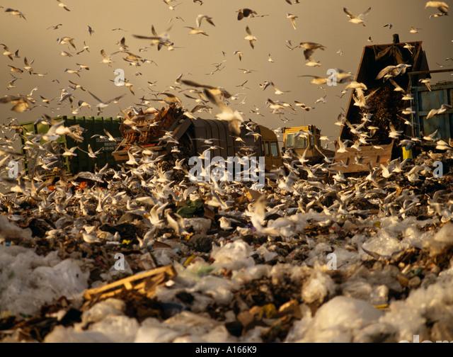 wasteful society