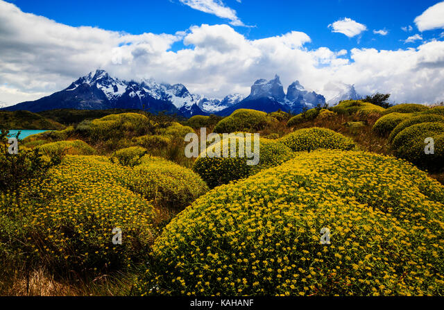 cuernos-del-paine-massif-with-flowering-