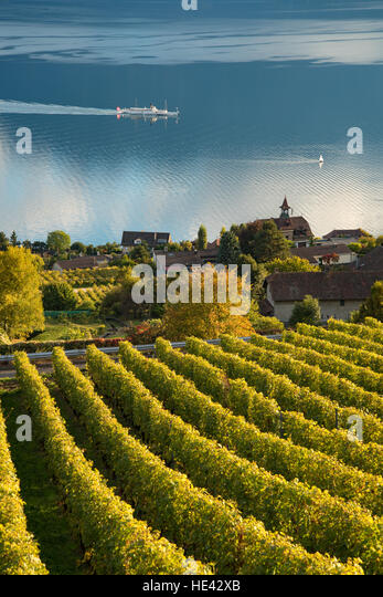 lavaux-unesco-world-heritage-site-vinyar