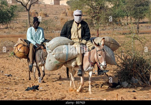 black-men-riding-donkeys-equus-asinus-wi
