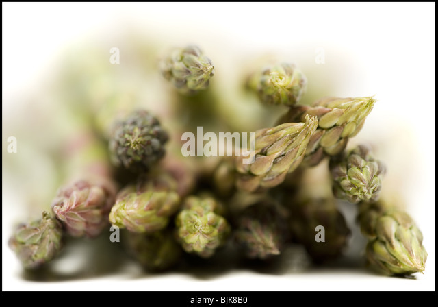 Bunch of asparagus spears close-up - Stock Image