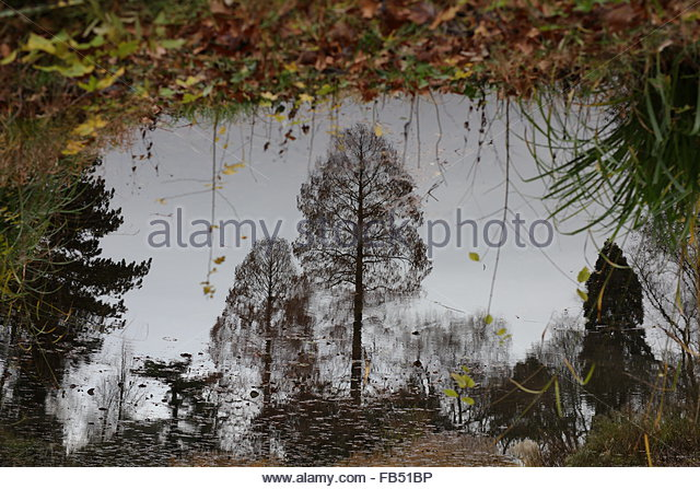 reflection-of-trees-in-pond-photo-turned