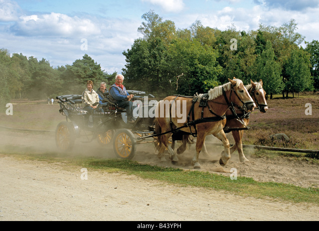 horse-and-carriage-on-the-lneburger-heid