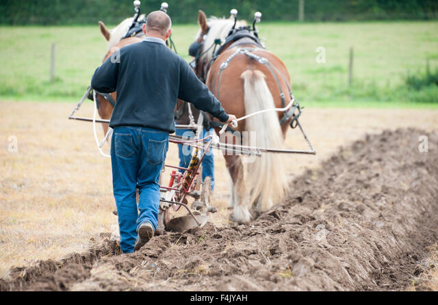 horse-drawn-ploughing-demonstration-at-t
