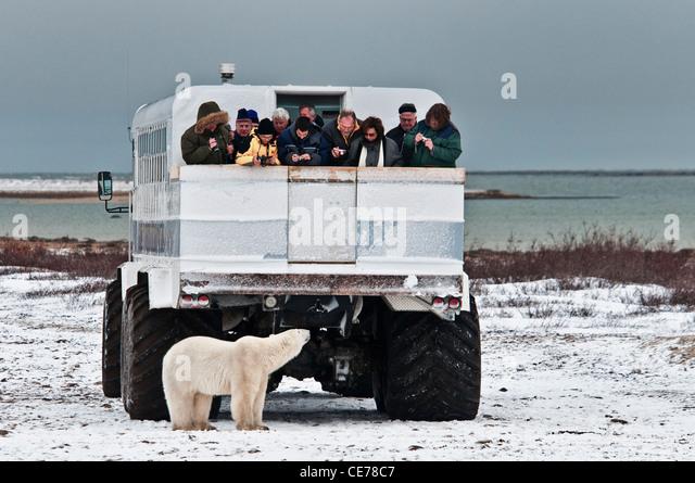 tourists-viewing-a-curious-polar-bear-fr