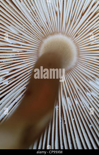 a-look-at-a-mushroom%60s-lamella-CP99XM.