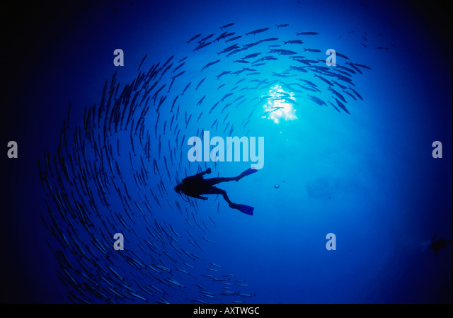 scuba diving experience essay