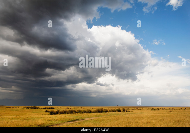 Storm clouds move over the vast wide open plains of the Serengeti in the Masai Mara Reserve, Kenya. - Stock Image