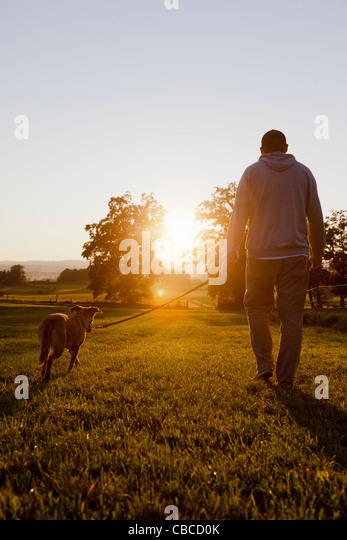Man walking dog in rural field - Stock Image