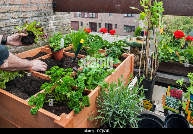 square-foot-gardening-by-planting-flower