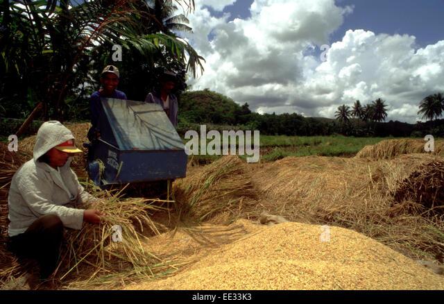 the origin of rice bohol