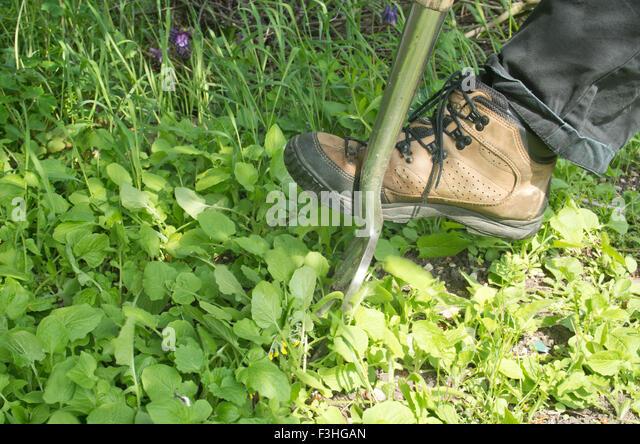 weeding-garden-f3hgan.jpg