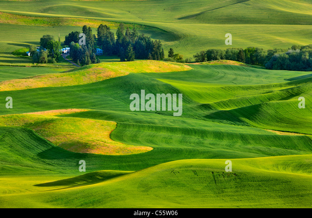 High angle view of green fields, Steptoe Butte, Palouse, Washington State, USA - Stock Image