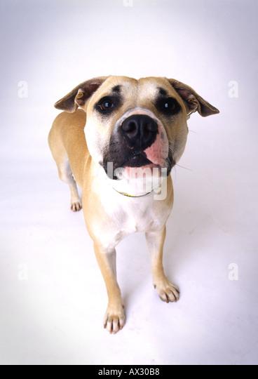 SAD DOG - Stock Image