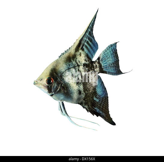 Fish Images Stock Photos amp Vectors  Shutterstock